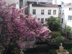 Cherry blossom seen from our window, April 2015