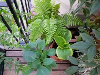 fine foliage 3