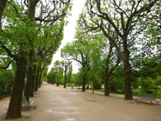 Plane trees coming into leaf in the Jardin des Plantes, April 2015