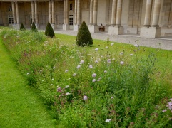 Wildflower planting at the Hôtel de Soubise