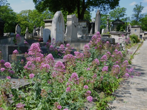 Red valerian in Père Lachaise cemetery