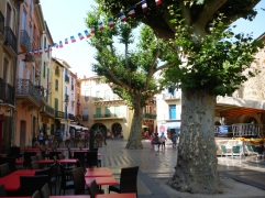 Plane trees in Colioure