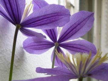 petal light