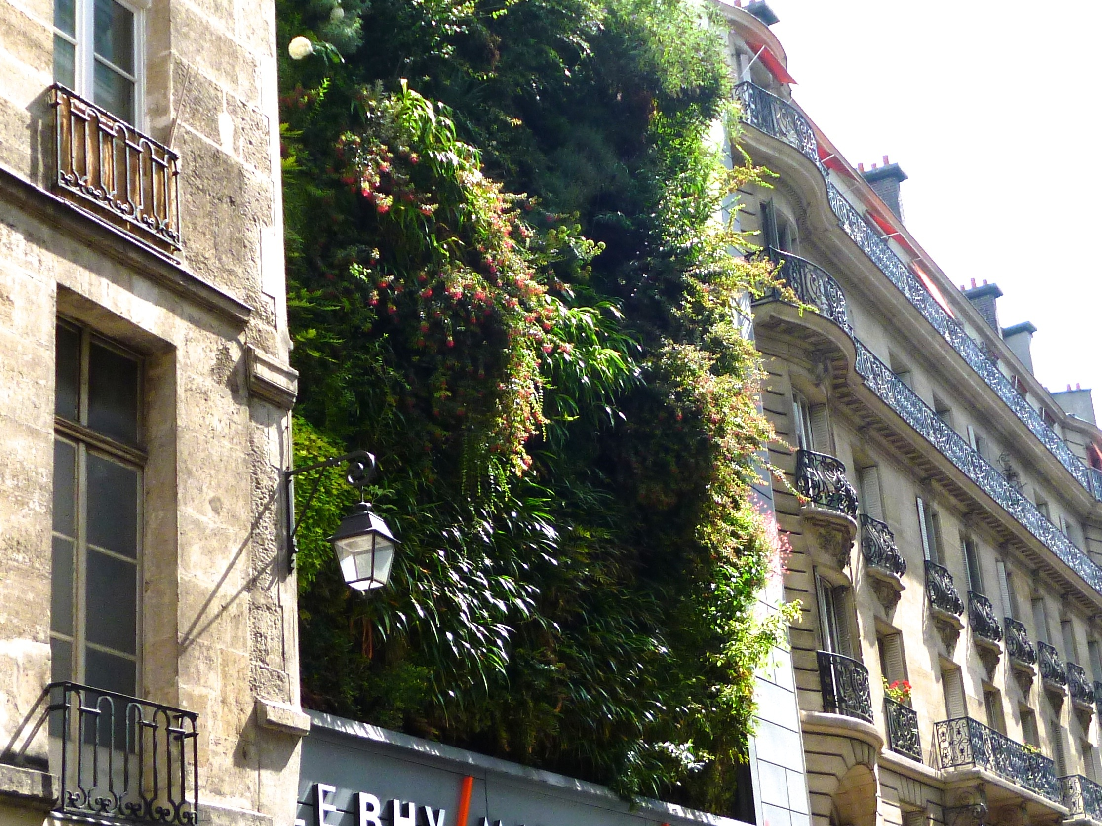 Green Walls Can Bring Plant Colour, Seasonal Interest And Wildlife Benefit  To Places Where Conventional Gardening Is Impossible. This Wall Garden On  Rue De ...