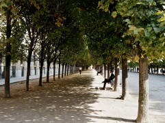 Welcome shade in the gardens of the Palais Royal