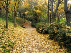 Autumn colour in Parc de Belleville, October 2015