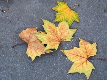 autumn plane leaves on tarmac