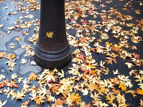 Late leaves on a Paris pavement - December 2015