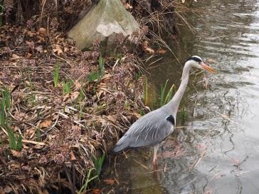 Heron in Parc de Bercy