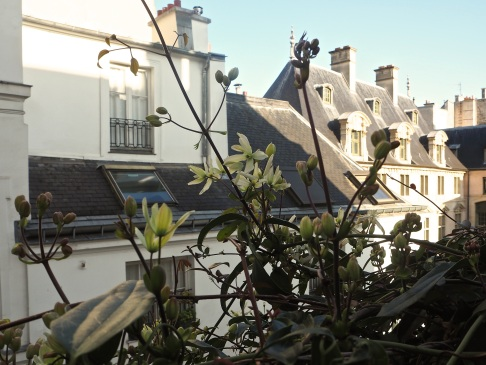 Clematis armandii and Marais rooftops