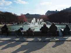 Early magnolias - Palais Royal - March 2016