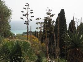 agaves and aloes La Mortola garden