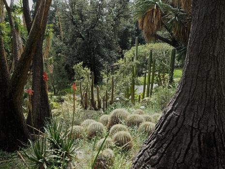 Hanbury garden La Mortola cacti