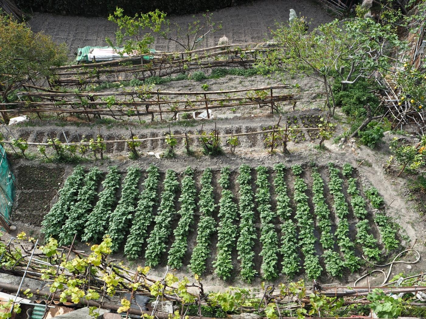 Ventimiglia market garden vegetables