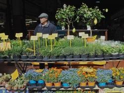 Ventimiglia market plant seller