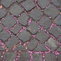 Rome paving and fallen petals
