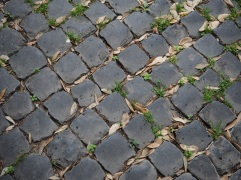 Rome paving and leaves