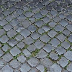 Rome paving & plants
