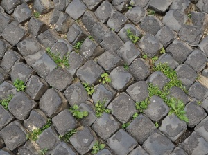 Rome paving and plants