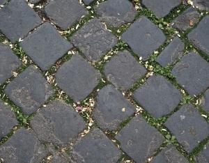Rome paving petals & plants