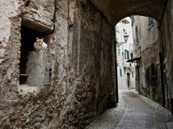 Ventimiglia Alta street view with cat