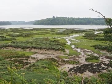 Low tide on the Auray river, down stream from St Goustan. The smooth green sward is not short grazed grass, as the photo might suggest, but a 'lawn' of green alga.