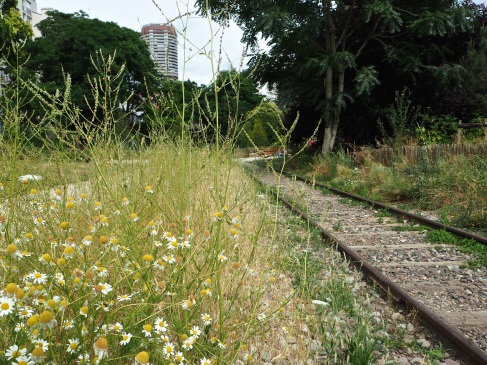 A strip of wild vegetation between the surfaced footpath and the remaining rails - Petite Ceinture