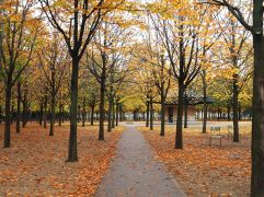 Autumn leaves in the Jardin du Luxembourg - October 2016