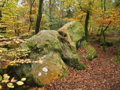 Ridges of strange rock formations give the forest its distinctive character