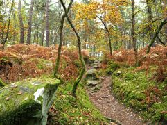 Bracken, pine and moss
