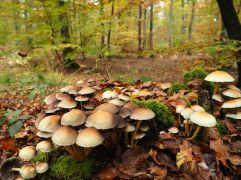 More fungi and beech trees