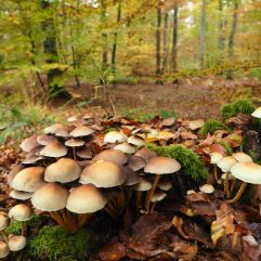Fontainebleau ramble - November 2016