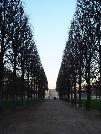 Leafless trees reveal the precision of their winter pruning.