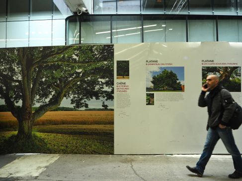 Temporary hoardings host an exhibition on venerable trees, relaxing but a little incongruous.
