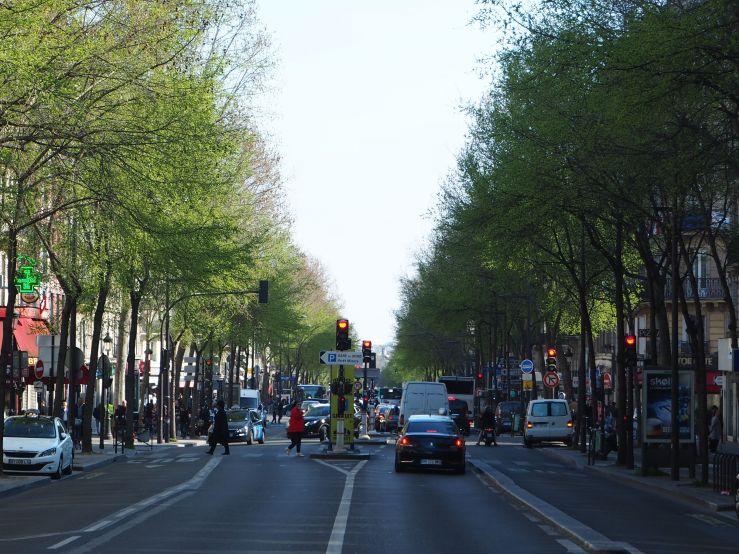 boulevard magenta trees