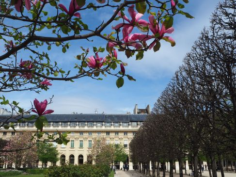 Magnolias and garden geometry - Palais Royal - March 29th 2017