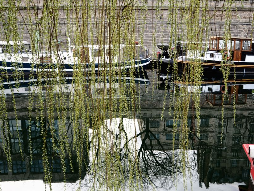 Weeping willow Port de l'Arsenal Paris