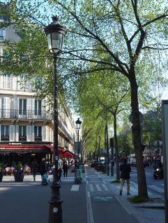 Street trees in Boulevard Magenta - March 2017