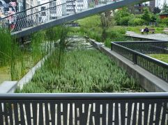 Rainwater ponds framed in concrete and steel