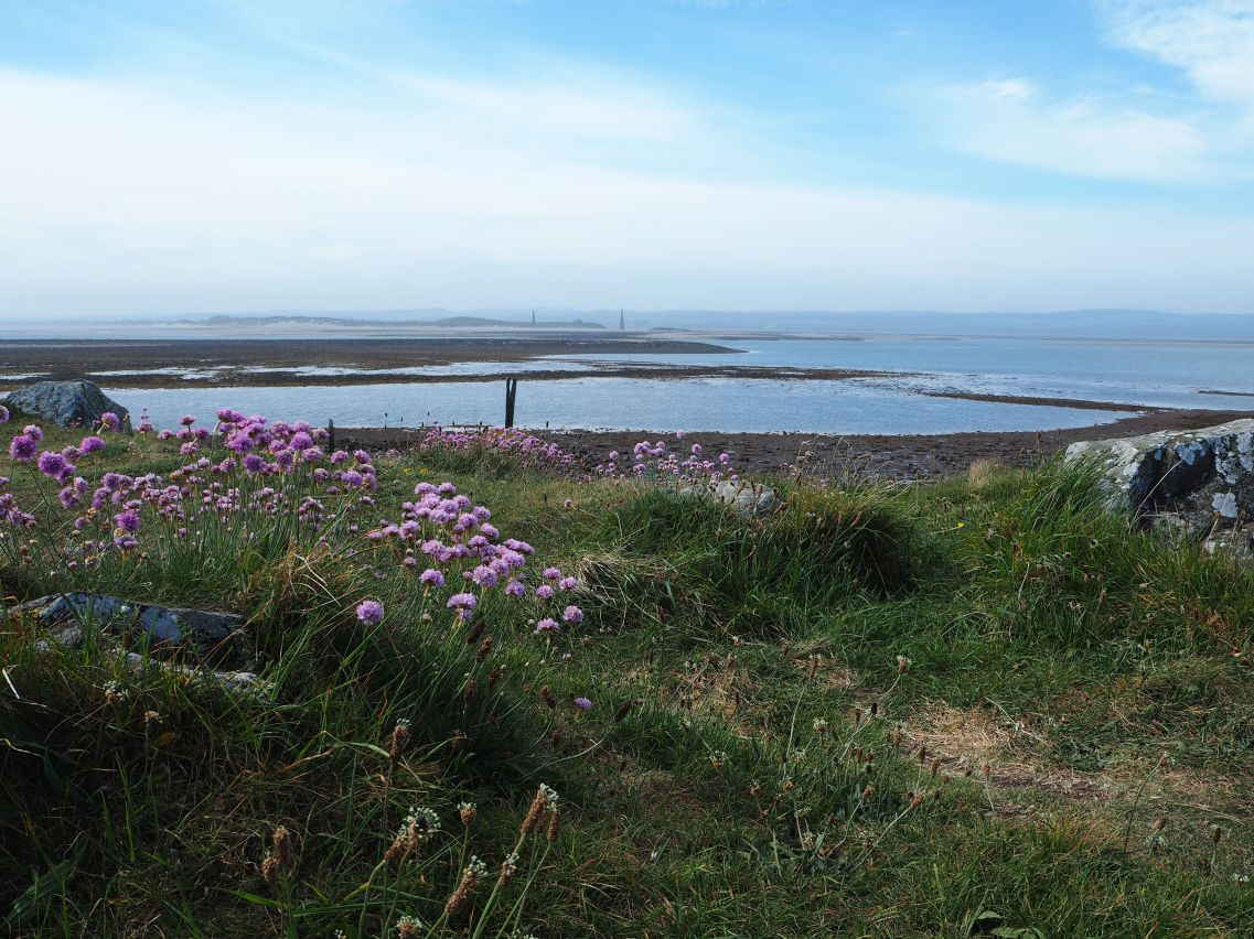 Lindisfarne sea thrift and channel markers