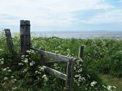 Looking back from Lindisfarne - just ten miles south of Spittal off the Northumberland coast - May 2017