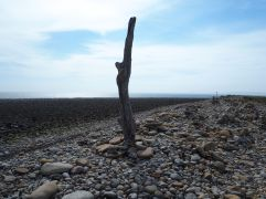 lindisfarne driftwood and pebbles