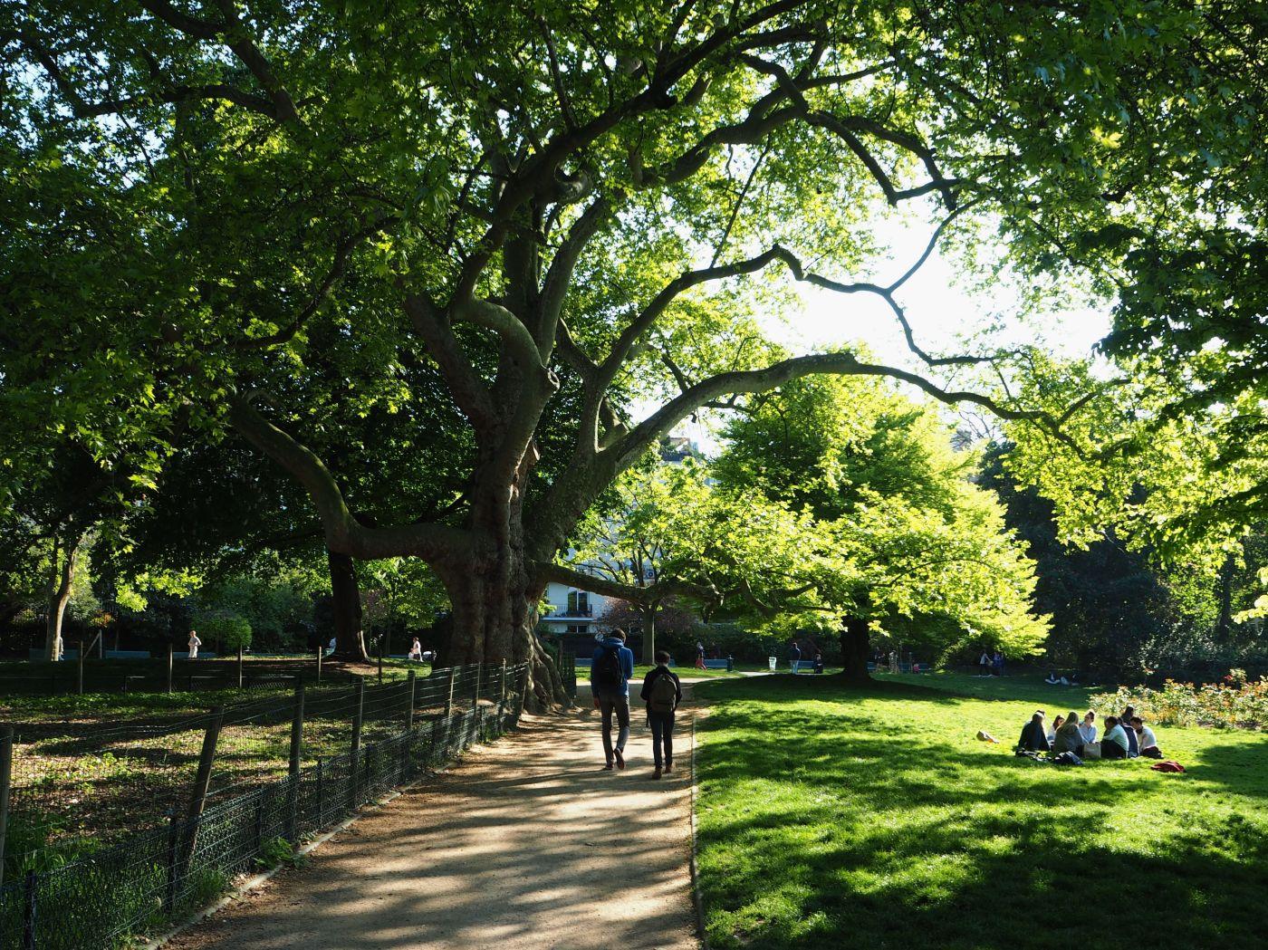 parc monceau platane remarquable