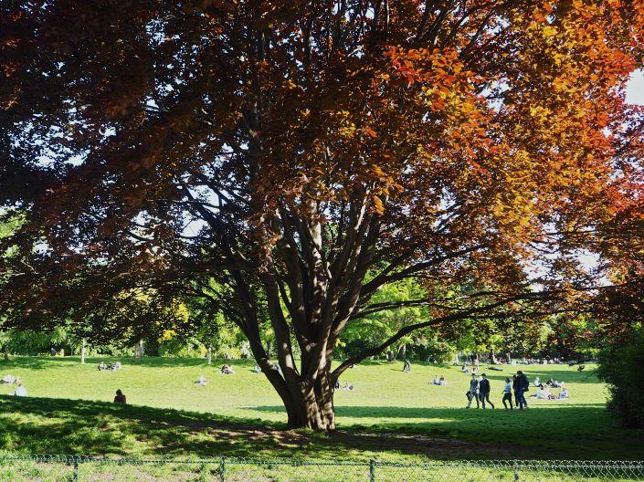 parc monceau hêtre rouge