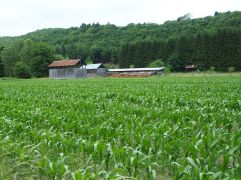 tobacco barns in the Semois valley