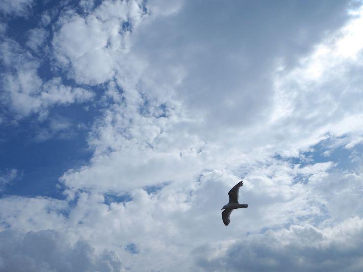 seagull clouds blue sky