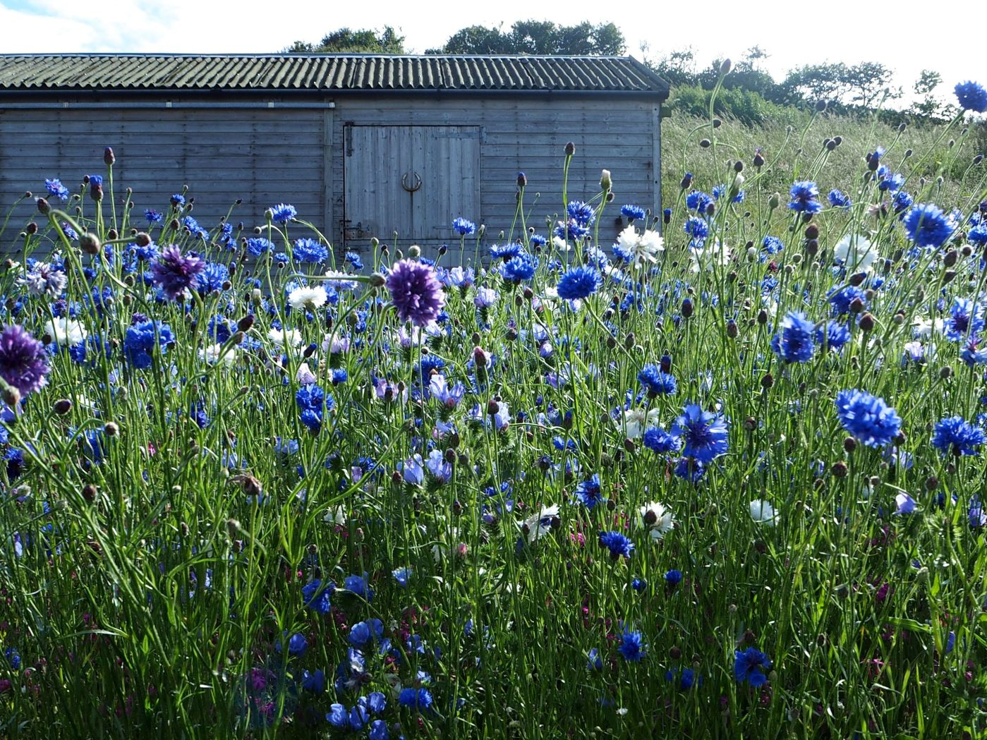 azure pictorial meadows mix berwick