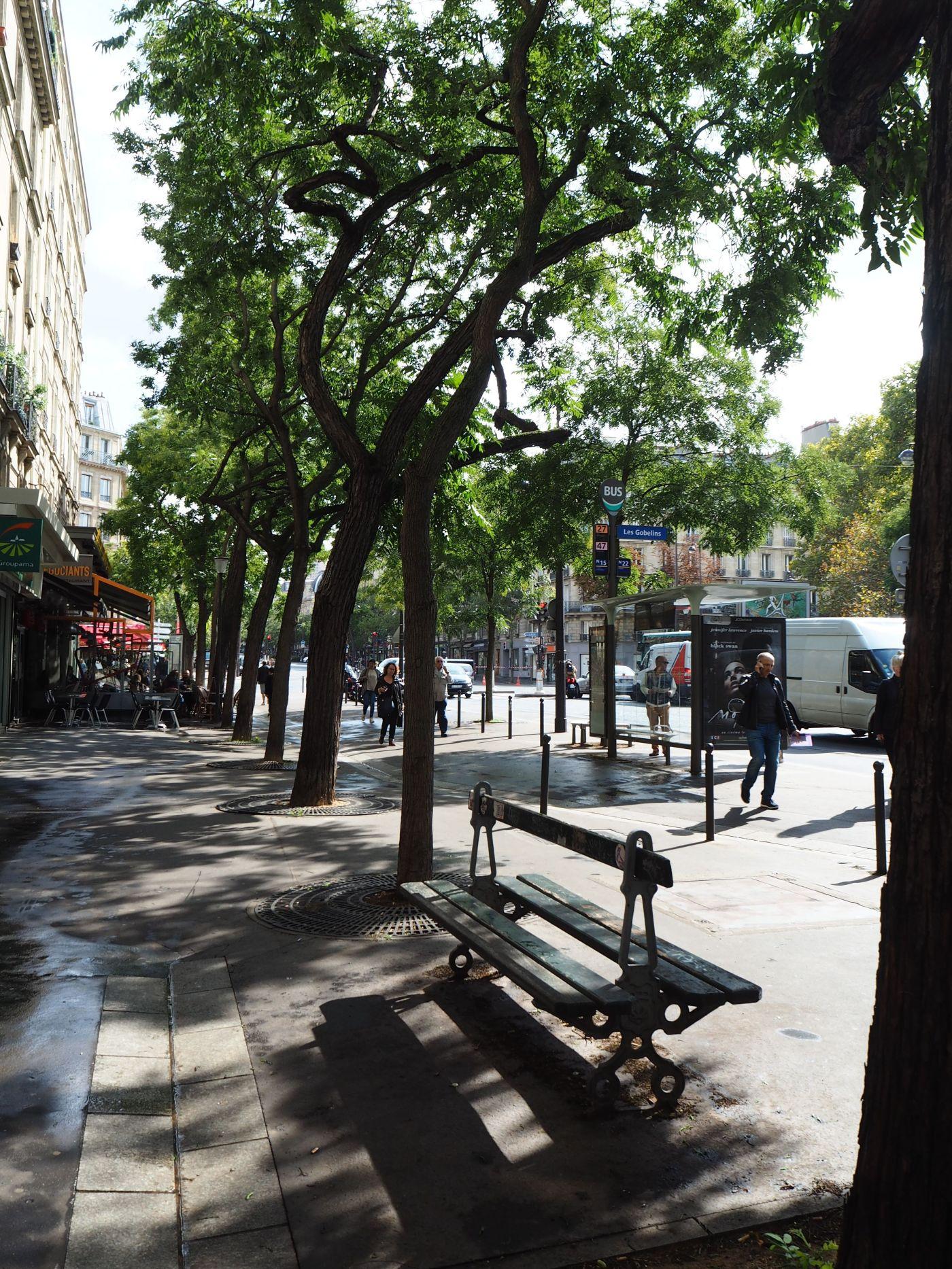 street trees and seat paris
