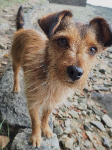 A whiskery dog near Auray