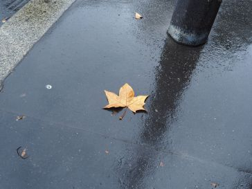 Leaf and lamp post on a wet day